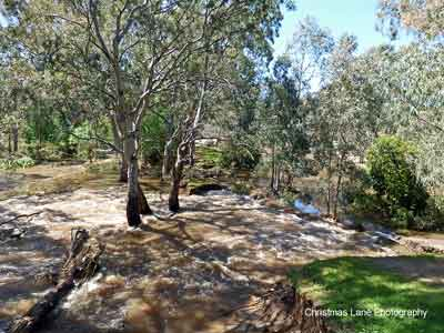 The River Torrens, River Torrens Linear Trail, Paradise, SA
