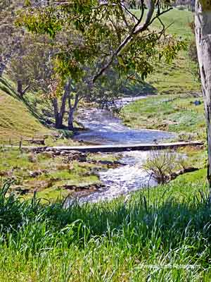 The River Torrens, Torrens Valley Road, Gumeracha, SA